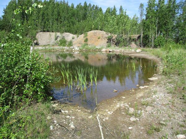 Ruduksen LUMO-ohjelma tuottaa tulosta Porvoon Kråkössä, jossa luonnon monimuotoisuus on lisääntynyt selvästi. Esimerkiksi uhanalaiset viitasammakot ovat kuteneet niille varta vasten rakennettuihin lammikoihin.